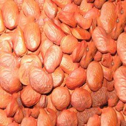 Karanja Seed