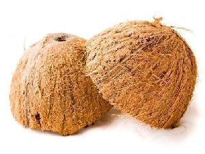 Coconut Shell