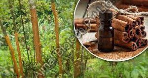 Cinnamon Bark Oil