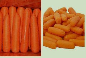 IQF/ Frozen Baby Carrot