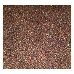Nachni Seeds
