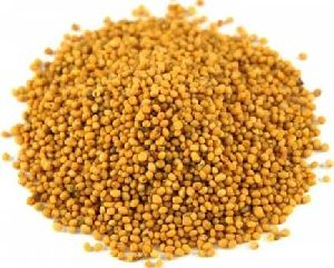 Big Mustard Seeds