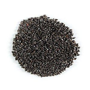 Tulsi Seeds