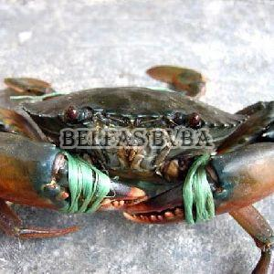 Frozen Green Crab