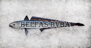 Frozen Hoki Fish