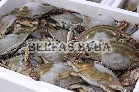 Frozen Mud Crabs