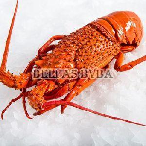 Frozen Rock Lobster