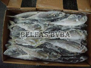 Frozen Stockfish