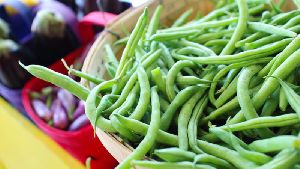 Fresh Lafa Beans
