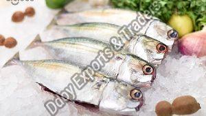 Fresh Ayala Fish