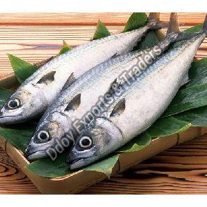 Fresh Vanjaram Fish