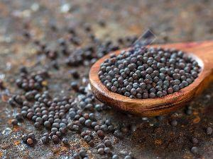 Mustard Seed Extract