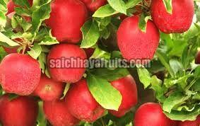 Fresh Himachal Apple