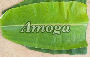 Fresh Banana Leaf