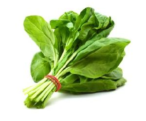 Fresh Organic Spinach Leaves