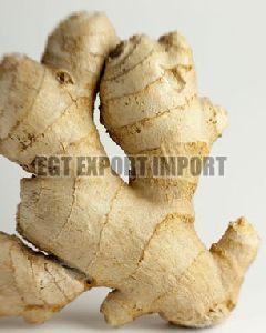 Pattala White Washed Ginger