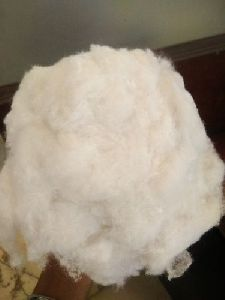 Shankar 6 Raw Cotton Fiber