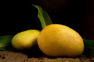 Fresh Alphanso Mango