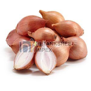 Fresh Shallots Onion