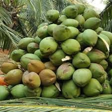 Organic Green Coconut
