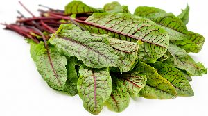 Fresh Sorrel Leaves