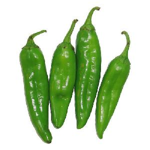 Fresh Nandita Jalapeno Green Chilli