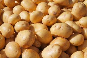 302 Potato