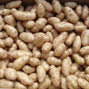 Khyati Potato