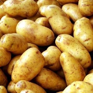 Pushkar Potato