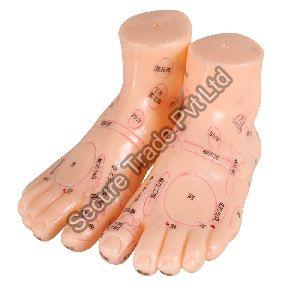Acupuncture Foot Model