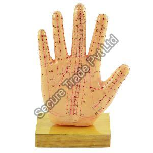 Acupuncture Hand Model
