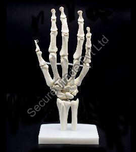 Human Hand Joint Model