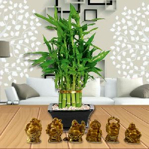 Attractive Gift of 2 Layer Lucky Bamboo Plant in Glass Pot with Laughing Buddha Statue Set
