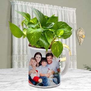 Elegant Selection of Money Plant in a Personalized Coffee Mug