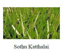 Sothu Kathalai Leaves