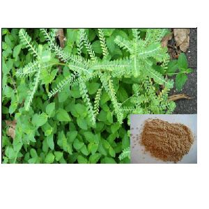 Phyllanthus Extract