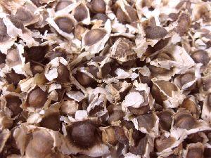 Dry Moringa Seeds
