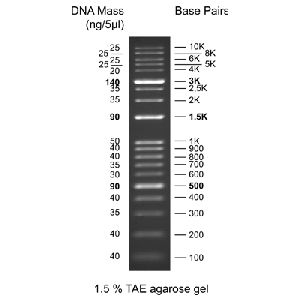 KPlus DNA Ladder