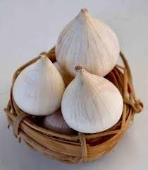 Fresh Single Clove Garlic