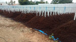 Coco Peat Compost