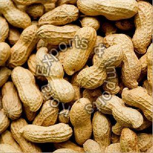 Hybrid Shelled Groundnuts