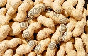 Natural Shelled Groundnuts