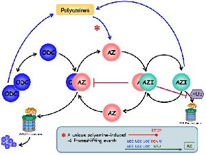 Polyamine Fluid
