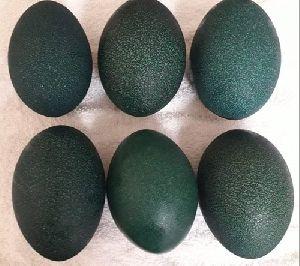 Emu Fertile Eggs