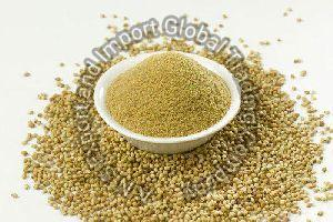 Coriander Extract Powder