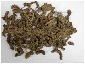 Dried Tagar Roots