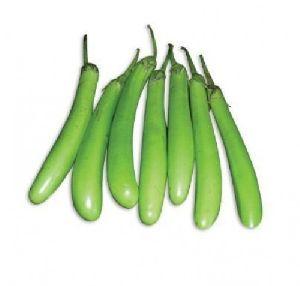 Fresh Green Brinjal