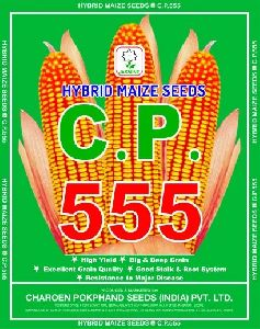 C.P. 555 Hybrid Maize Seeds