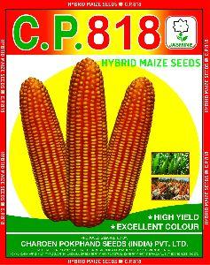 C.P. 818 Hybrid Maize Seeds