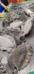 Frozen Big Cuttlefish